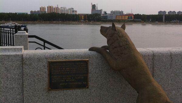 Памятник собаке Дружок на набережной реки Амур в городе Благовещенске