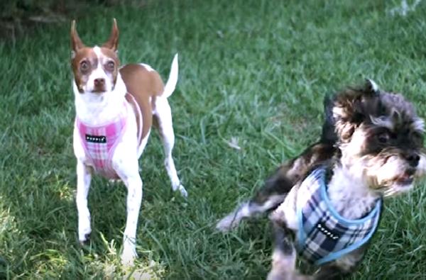 Как собака слышит другую собаку: замедленная съемка
