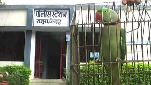 Арест попугая, или За что полиция Индии забрала в участок говорящую птицу