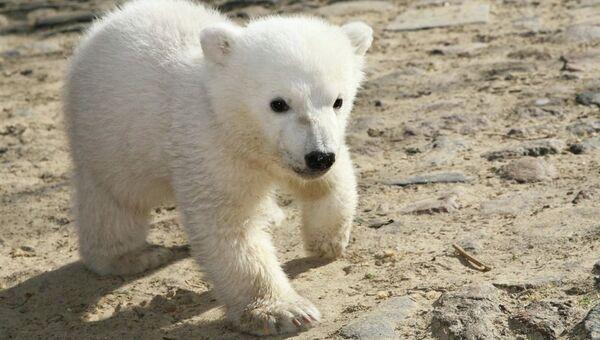 Медвежонок Кнут, символ Берлинского зоопарка.