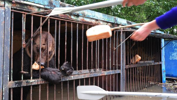 Сотрудники МЧС кормят медведя в зоопарке Зелёный остров города Уссурийска, пострадавшем в результате подтопления. Архивное фото