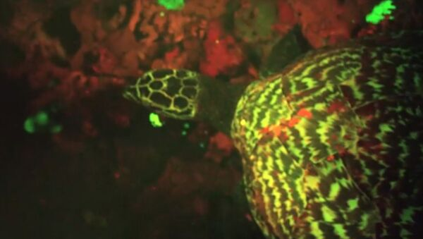 Кадр из видео National Geographic, на котором запечетлена флуоресцентная рептилия