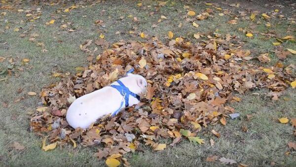Осенний кайф