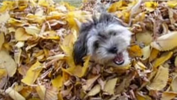 Осенняя радость