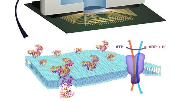 Био-электронный чип, созданный инженерами из университета Колумбии