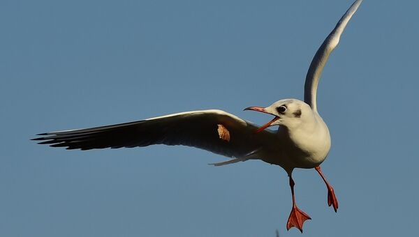 Чайка. Архивное фото