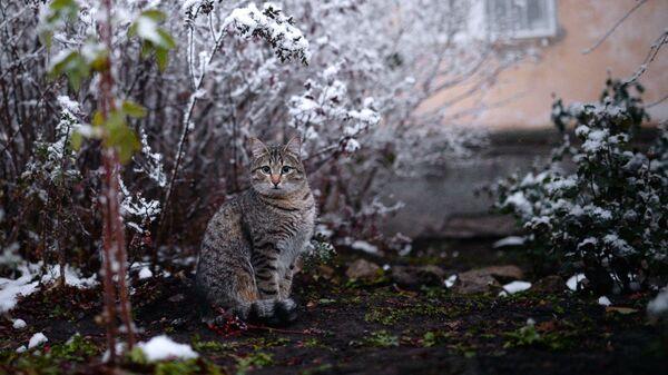 Кот во дворе дома в Ленинском районе Новосибирска.