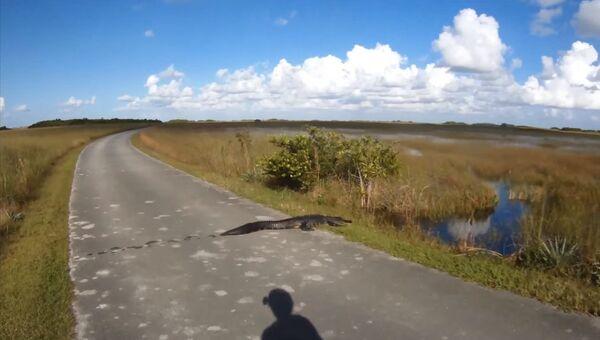 Крокодил… или аллигатор… Да не важно!