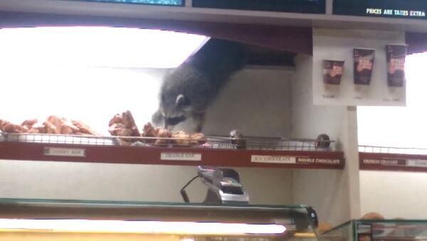 Енот, который очень любит пончики