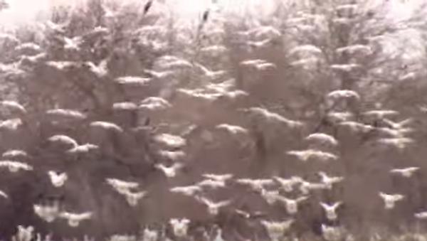 Тысячи птиц – к посадке готовы