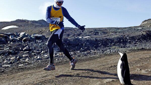 Участник Антарктического марафона пробегает рядом с пингвином