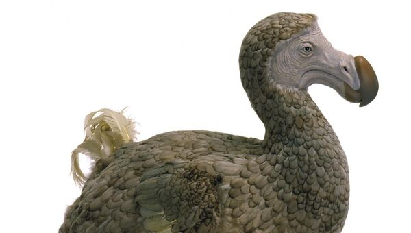 Вымершая птица-дронт, модель в натуральную величину