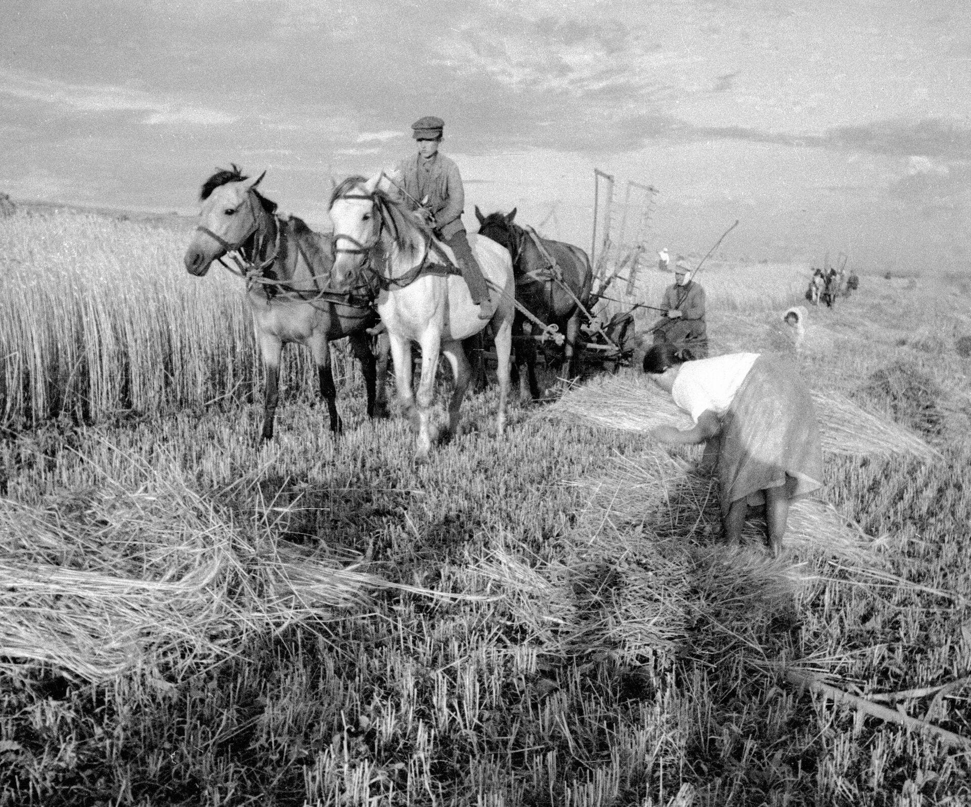 Уборка урожая. Украина - РИА Новости, 1920, 02.09.2020
