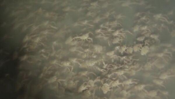Жутковатое зрелище на дне океана