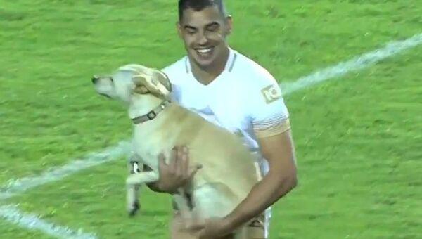 Как дружелюбный пес футбольный матч остановил