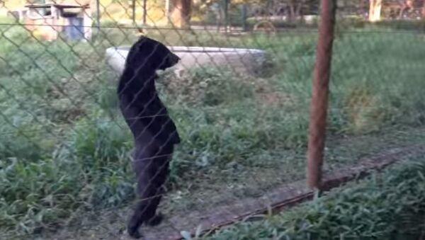 Медведь патрулирует свои владения