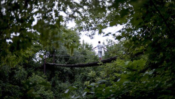 Лес. Архивное фото