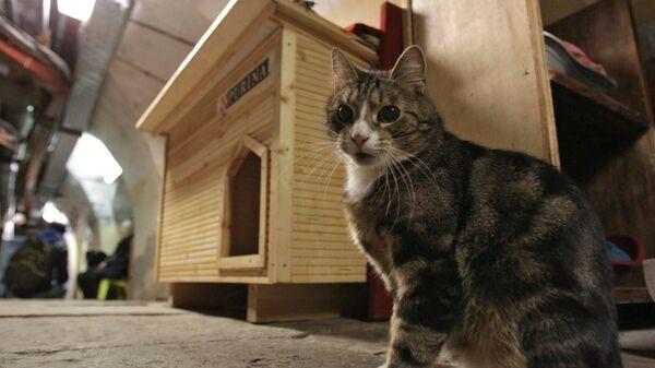 Кот возле нового дома в подвале Эрмитажа