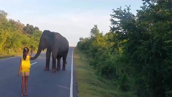Маленькая девочка и большой слон