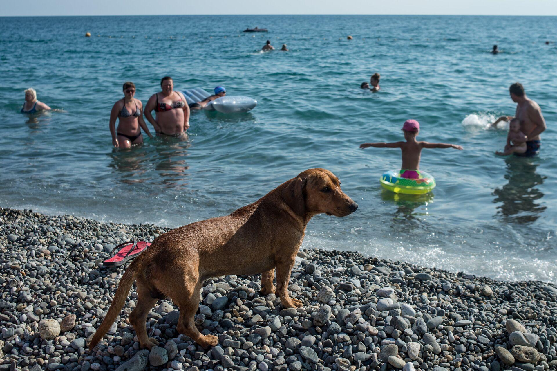 Собака на пляже около Олимпийского парка в Сочи - РИА Новости, 1920, 02.03.2021