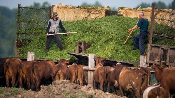 Заготовка корма для скота на сельскохозяйственной ферме. Архивное фото