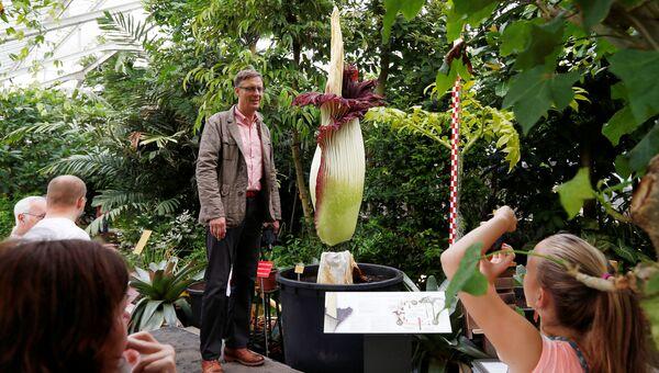Посетители фотографируются с цветком Titan Arum в ботаническом саду бельгийского города Мейзе