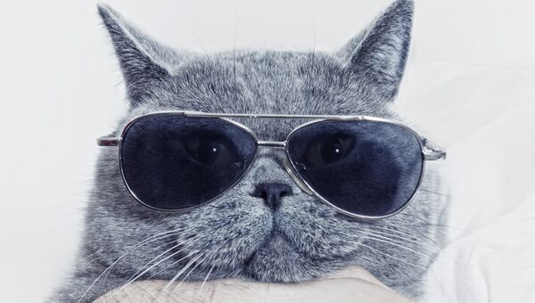 Кот в очках. Архивное фото