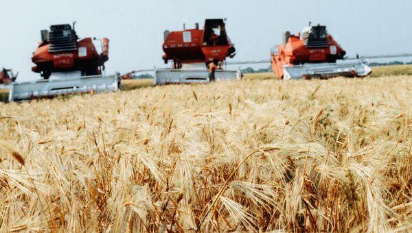 Жатва пшеницы. Архивное фото