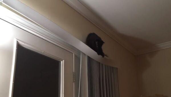Кот-негодяй