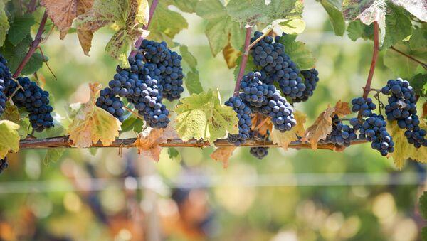 Виноград. Архивное фото