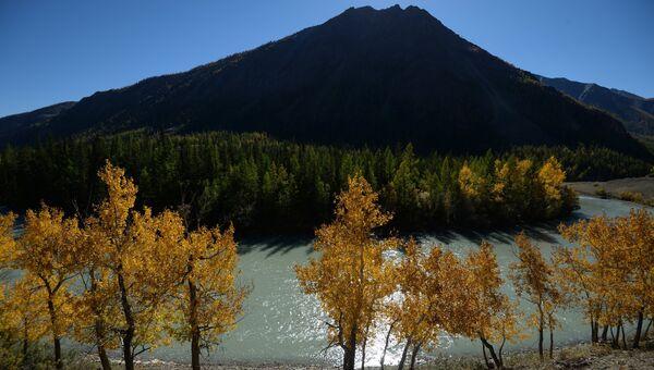 Река Чуя в Кош-Агачском районе Республики Алтай