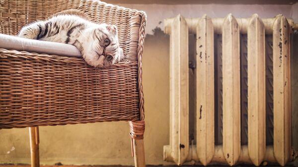 Кот в кресле у батареи