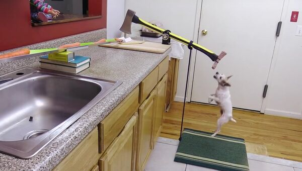 Американец автоматизировал кухню с помощью собаки