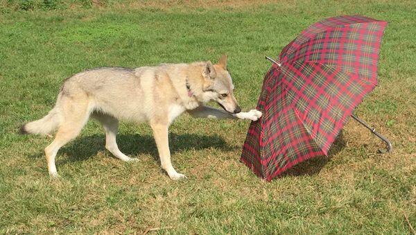 Собака автора статьи, участвовавшая в эксперименте