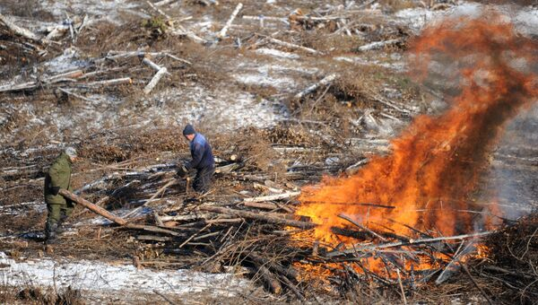 Вырубка леса. Архивное фото