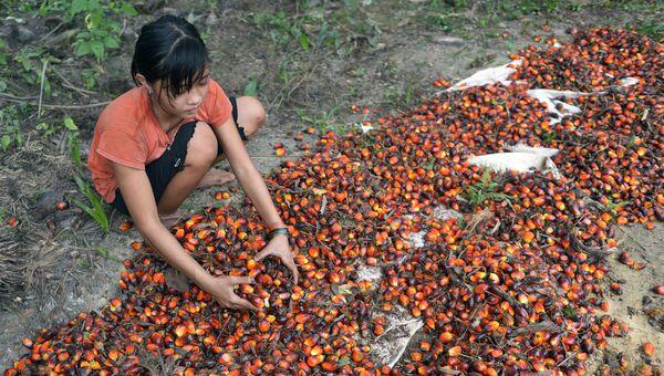 13-летняя девочка работает на пальмовой плантации в Индонезии. Архивное фото