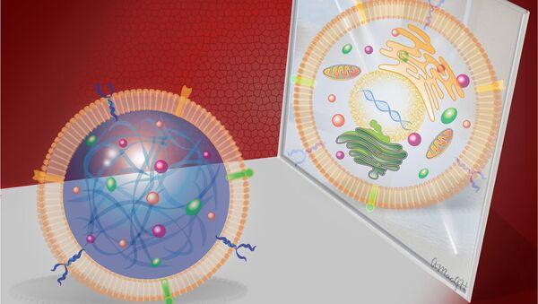 Муляж (слева) и нормальная стволовая клетка (справа)