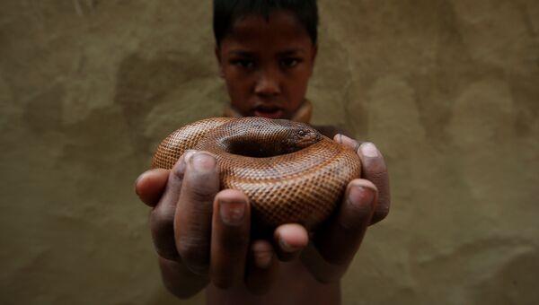Маниш Нат со змеей в поселении заклинателей змей Jogi Dera в штате Уттар-Прадеш, Индия