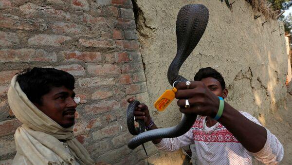 Заклинатель змей держит пойманную в доме кобру в поселении заклинателей змей Jogi Dera в штате Уттар-Прадеш, Индия