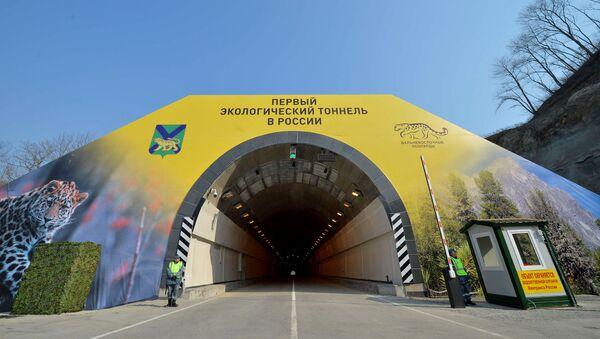 Дальневосточные леопарды осваивают переход над Нарвинским тоннелем