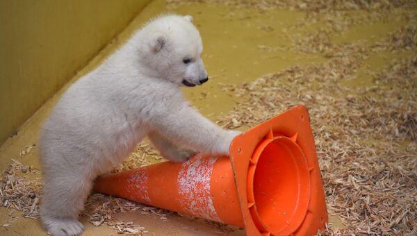 Белый медвежонок в зоопарке Бремерхафена, Германия