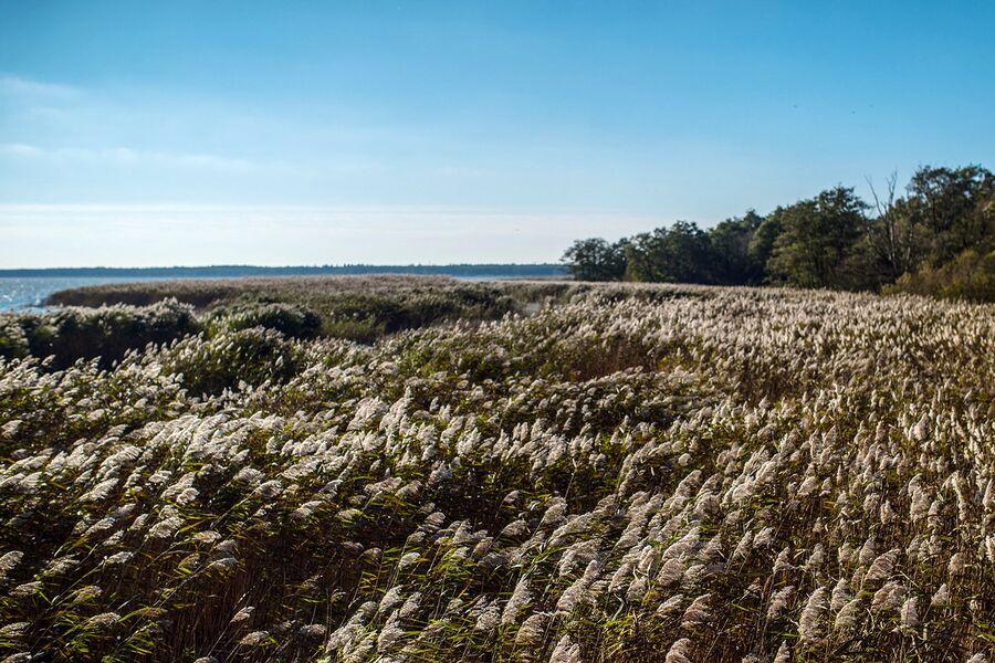 Национальный парк Куршская коса в Калининградской области