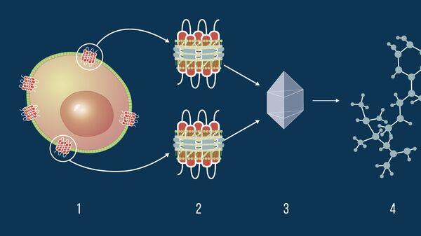Схема заморозки белка перед его изучением