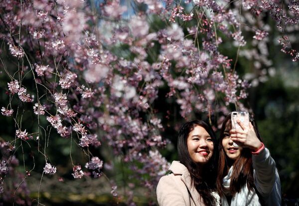 Девушки делают селфи на фоне цветущей сакуры в Токио, Япония