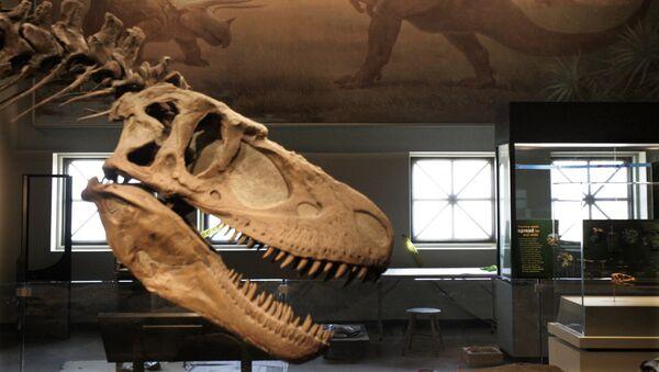 Череп дасплетозавра. Архивное фото