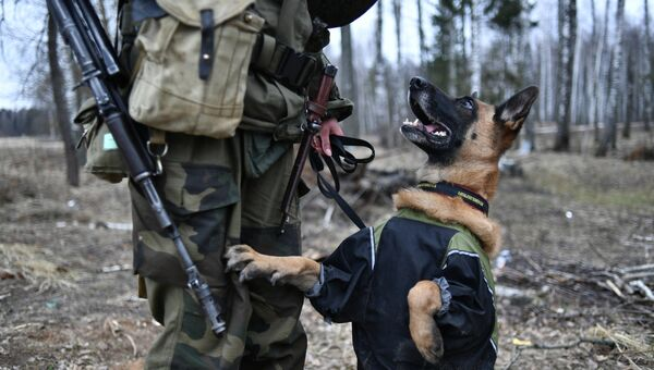 Служебная собака для разминирования с военнослужащим ВС Республики Беларусь во время совместных российско-белорусских учений в Витебске