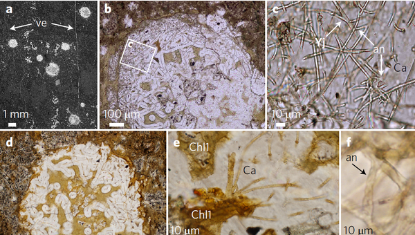 Останки грибов возрастом в 2,4 миллиарда лет, найденные в вулканических породах в ЮАР