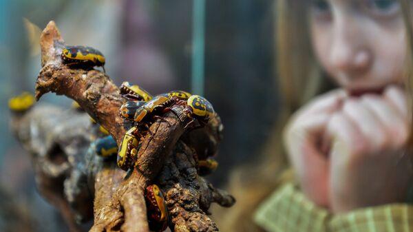 Девочка наблюдает за жуками в террариуме Дарвиновского музея во время международной акции Ночь музеев