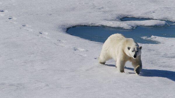 Киты и белые медведи: первые весенние исследования Русской Арктики – 2017