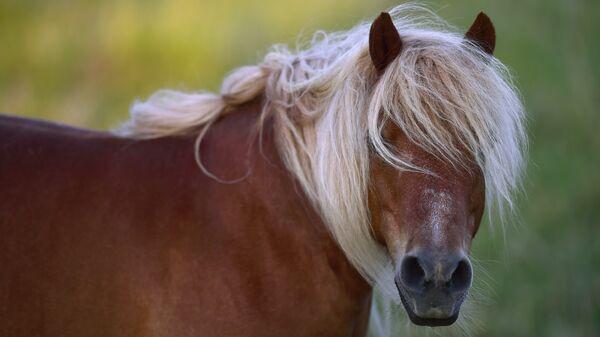 Пони. Архивное фото